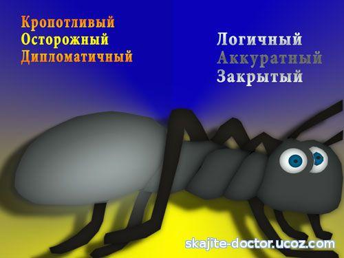 тип темперамента - меланхолик муравей